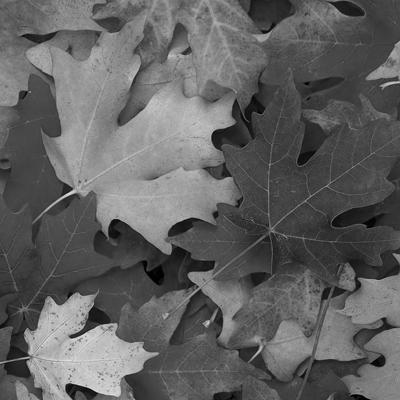 autunno contributi